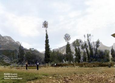 Campo de San Miguel con sus chopos podados.